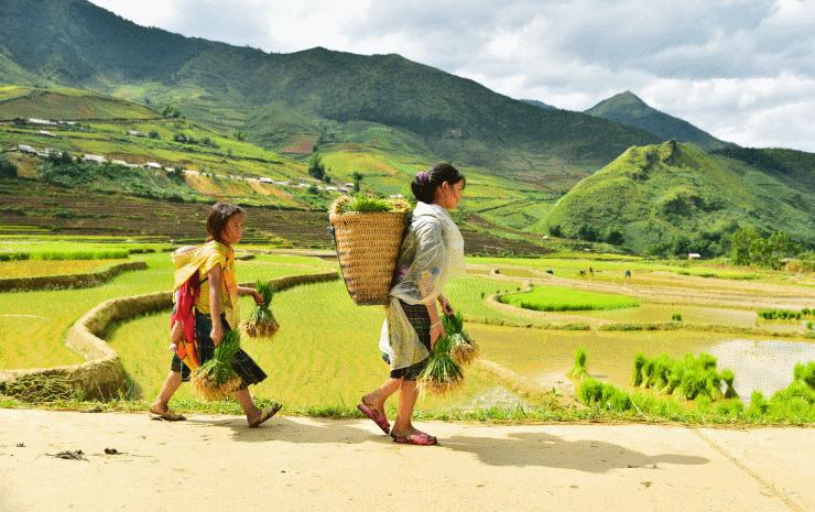arbeiter in vietnam
